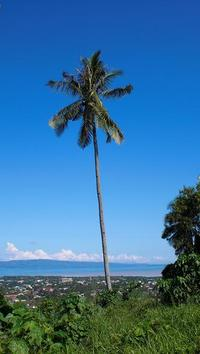 4davao_view_with_coconut1